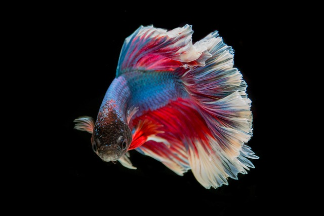 Was Du mit dem Fressverhalten siamesischer Kampffische gemeinsam hast